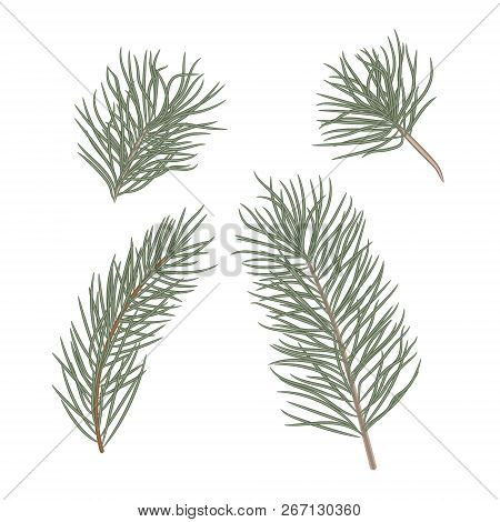 Christmas Tree Branches Set For Christmas Decor. Branches Close-up. Collection Of Pine Branches. Vec