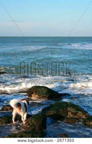 Cute dog is running by ocean on a sunny day poster