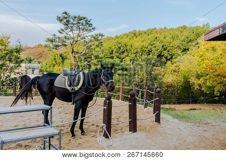Adult horse wearing saddle and bridle standing close to rope fence inside sandy riding enclosure at public park. poster