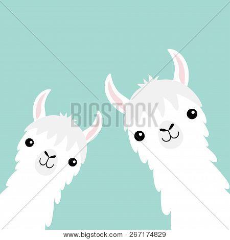 Two Llama Alpaca Animal Set. Face Neck. Fluffy Hair Fur. Cute Cartoon Funny Kawaii Character. Childi