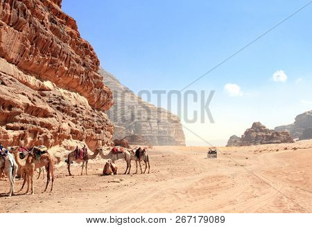 Jeep safari in Wadi Rum desert, Jordan. Camels and tourists in the car ride on off-road on sand among the beautiful rocks