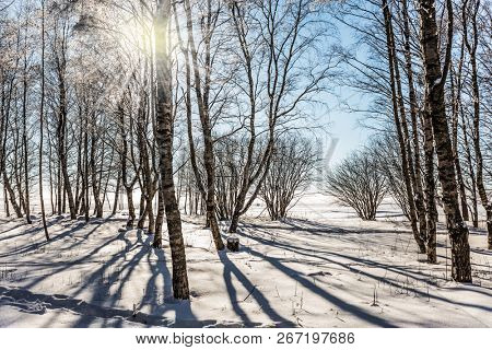 Dull polar winter sun. Long shadows on the snow. The concept of extreme and ecotourism. Bright winter frosty day
