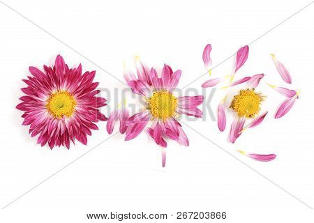 From Daisy With All Its Petals To Daisy With No Petals On White