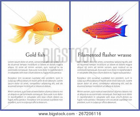 Filamented Flasher Wrasse And Gold Fish Posters. Freshwater Aquarium Pets Silhouette Image On White