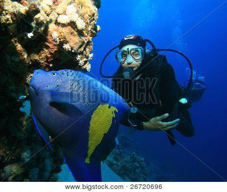 Arabian Angelfish (Pomacanthus maculosus) and Scuba Diver