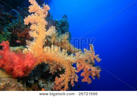 Red Soft Coral (Dendronephthya) poster