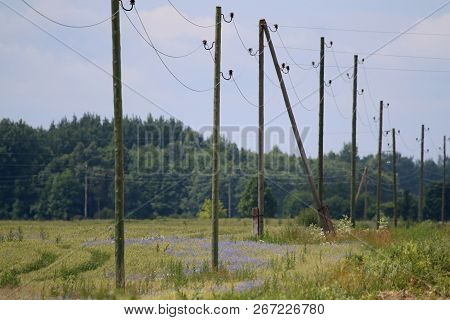 High-voltage Power Line On Wooden Poles Glade Near The Forest. Electricity Poles In Field. Grass, Fo