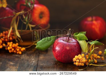 Autumn Harvest Red Apples Fruits And Sea Buckthorn Berry On A Dark Wooden Table Background. Copy Spa