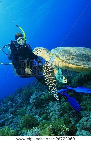 Turtle meets Scuba Diver