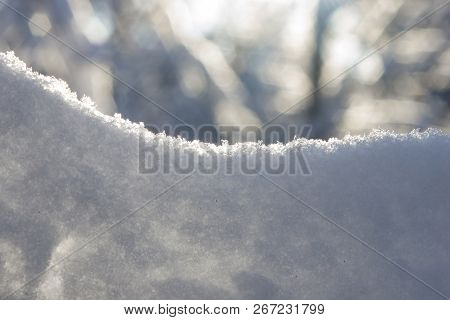 Tree branches in snow with backlight close-up, selective focus, shallow DOF poster
