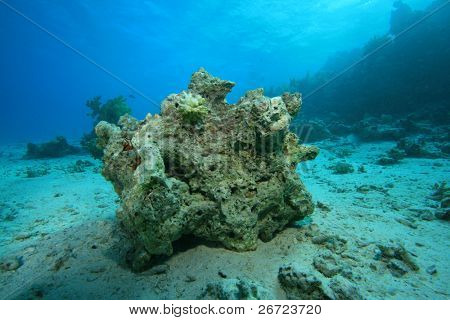 Environmental problem - Dead coral on a reef destroyed by global warming and pollution