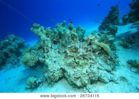 Dead coral reef killed by rising sea temperatures and pollution