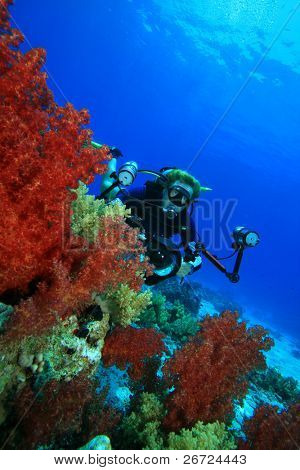 Scuba Diver with camera and beautiful Soft Corals at Ras Mohamed National Park, Egypt