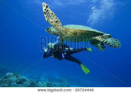 Scuba Diver attains her dream of swimming with a wild Turtle