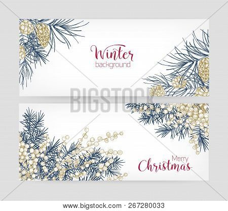 Bundle Of Horizontal Botanical Backgrounds With Coniferous Tree Branches And Cones, Juniper Berries