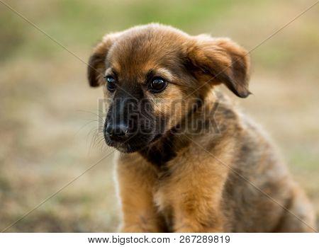 mongrel puppy sitting on grass in a summer day