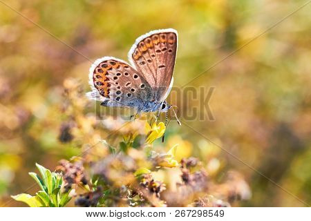 Macro Photo Of A Butterfly Close-up. A Butterfly Sits On A Flower. The Moth Sits On A Flower And Dri