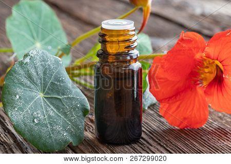 A Bottle Of Nasturtium Tincture With Fresh Tropaeolum Majus Flowers And Leaves