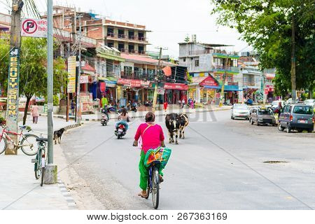 Sacred Cows In Pokhara Town, Nepal