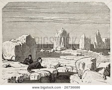 Old illustration of walruses on polar ice pack. Original, from unknown author, was published on L'Eau, by G. Tissandier, Hachette, Paris, 1873 poster