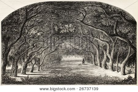 Old illustration of chestnut walk.  Created by De Bar and Cosson-Smeeton, after tablet of Rousseau in Khalil-Bey gallery. Published on L'Illustration, Journal Universel, Paris, 1868