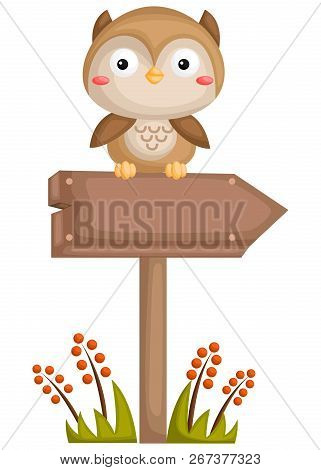 An Empty Sign On The Forest With An Owl On Top Of It
