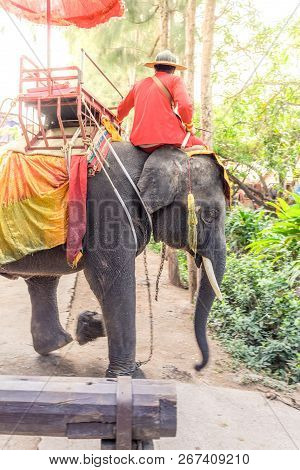 Unidentified Elephant Rider On Elephant Ride In The Historical Park