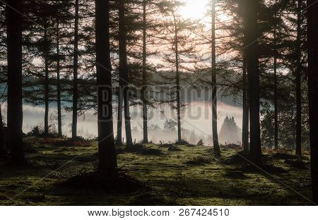 Magnificent Trees Through A Beautiful Fog In The Fields Of The Valley. The Treetops Protrude From Th
