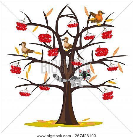 Vector Illustration Tree Rowanberry By Late Autumn