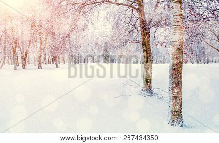 Winter landscape - snowy winter trees in winter forest in the sunny winter morning. Winter landscape with forest winter trees. Tranquil winter nature in soft morning sunlight