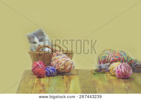 Kitten With Knitting Ravels In A Basket