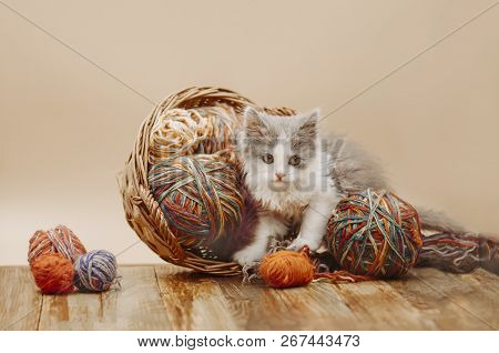Baby Kitten Playing With Ball Of Yarn On Wooden Floor And Black Background
