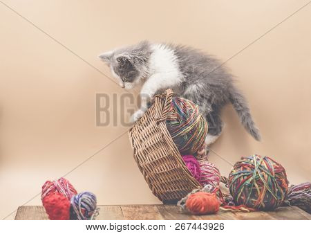 Kitten With Colorful Wool Yarn Balls