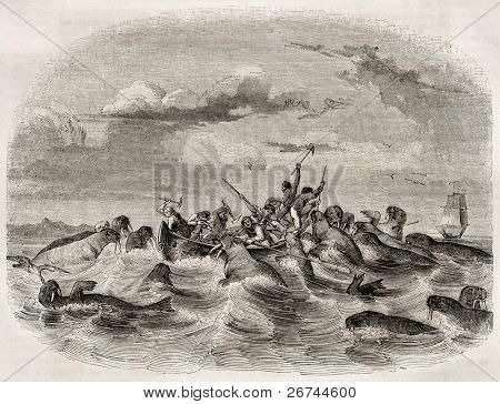 Sailors on a boat fighting against walruses. Created by Himeli after Buchanan, published on Magasin Pittoresque, Paris, 1843 poster