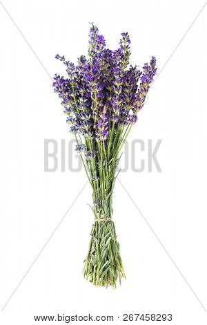 Bunch of lavender flowers isolated on white background