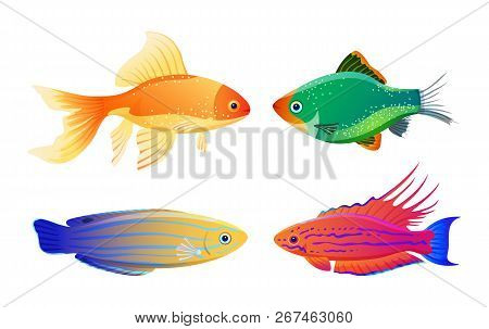 Green Tiger Barb And Goldfish, Filamented Flasher And Blue Striped Tamarin Wrasse. Rare Varicolored