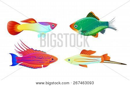 Aquarium Pet Shapes Isolated On White. Freshwater Animal Guppy And Green Tiger Barb, Swordtail Fish