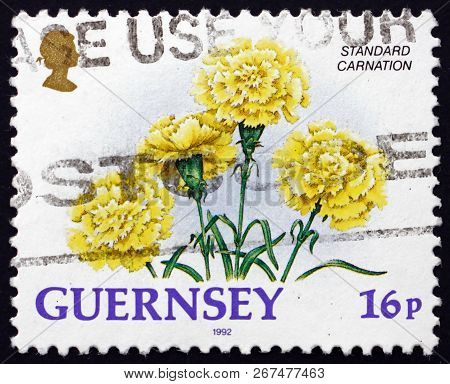 Guernsey - Circa 1992: A Stamp Printed In Guernsey Shows Standard Carnation, Dianthus Caryophyllus,
