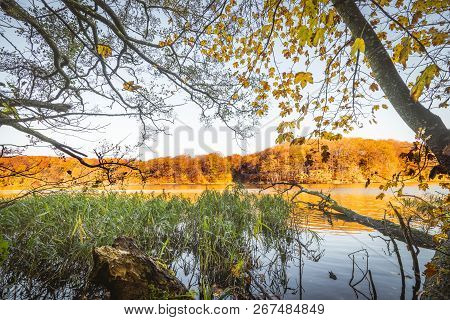 Colorful Trees By A Lake In The Fall With A Tree Log In The Water