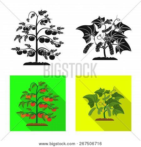Vector Illustration Of Greenhouse And Plant Icon. Collection Of Greenhouse And Garden Vector Icon Fo