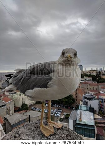 Cute Sea Gull Looking Staring At You