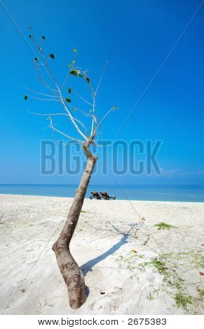 Tree On A Beach