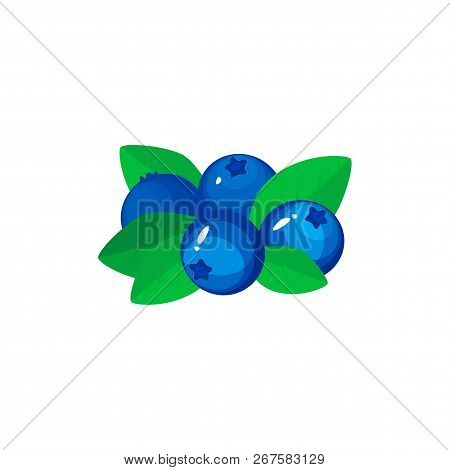 Blueberry Isolated On White Background. Bright Vector Illustration Of Colorful Half And Whole Of Jui