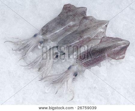 Freah baby squid.