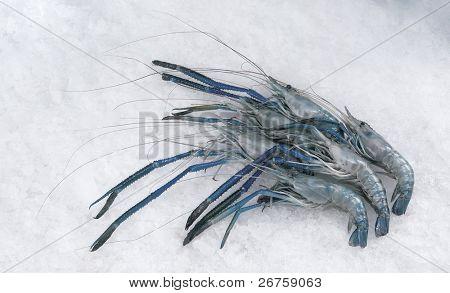 Udang galah/ river prawn on ice. poster
