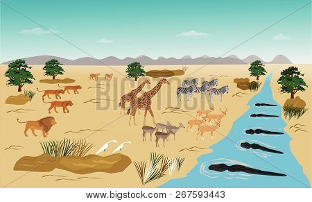 Herd Of Animals Standing On The River. Because Run Out. From The Swarm Of Lions. And The Crocodile I