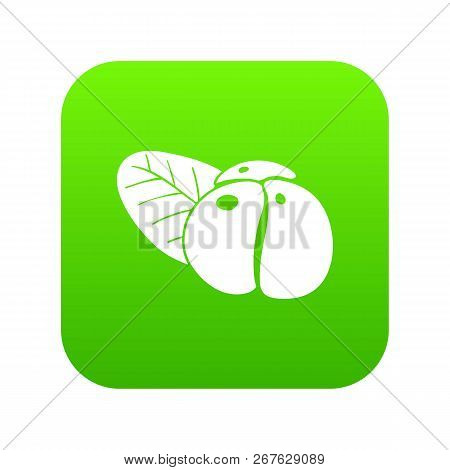 Ephedra Icon Green Vector Isolated On White Background