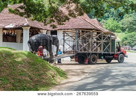 Kandy, Sri Lanka - July 19, 2016: Unloading Of An Elephant In The Streets Of Kandy During Poya Full