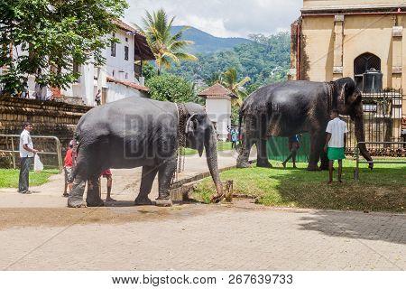 Kandy, Sri Lanka - July 19, 2016: Elephants In The Streets Of Kandy During Poya Full Moon Holiday.