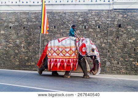 Kandy, Sri Lanka - July 19, 2016: Decorated Elephant On A Street Of Kandy During Poya Full Moon Holi
